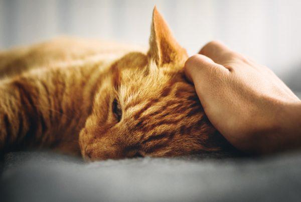 Tiere in der Pflege, Katze wird gestreichelt, Haustier